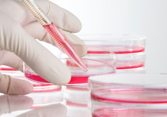 phd thesis cell culture Find a phd search funded phd projects, programs & scholarships in cell culture search for phd funding, scholarships & studentships in the uk, europe and around the world.